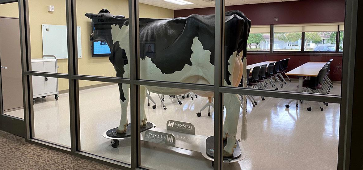 Millie, Mid-State's calf-birthing simulator, takes her position in the College's new dedicated agriculture lab on the 马什菲尔德校园. Renovation on the new space began this summer and was completed in time for use by students enrolled this fall in the Agribusiness and Science 技术 associate degree program and embedded agriculture technical diplomas.